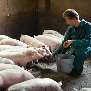 pork-verantwoord